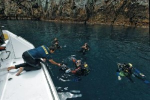 Tauchen in Neuseeland - Neuseeland Reisen